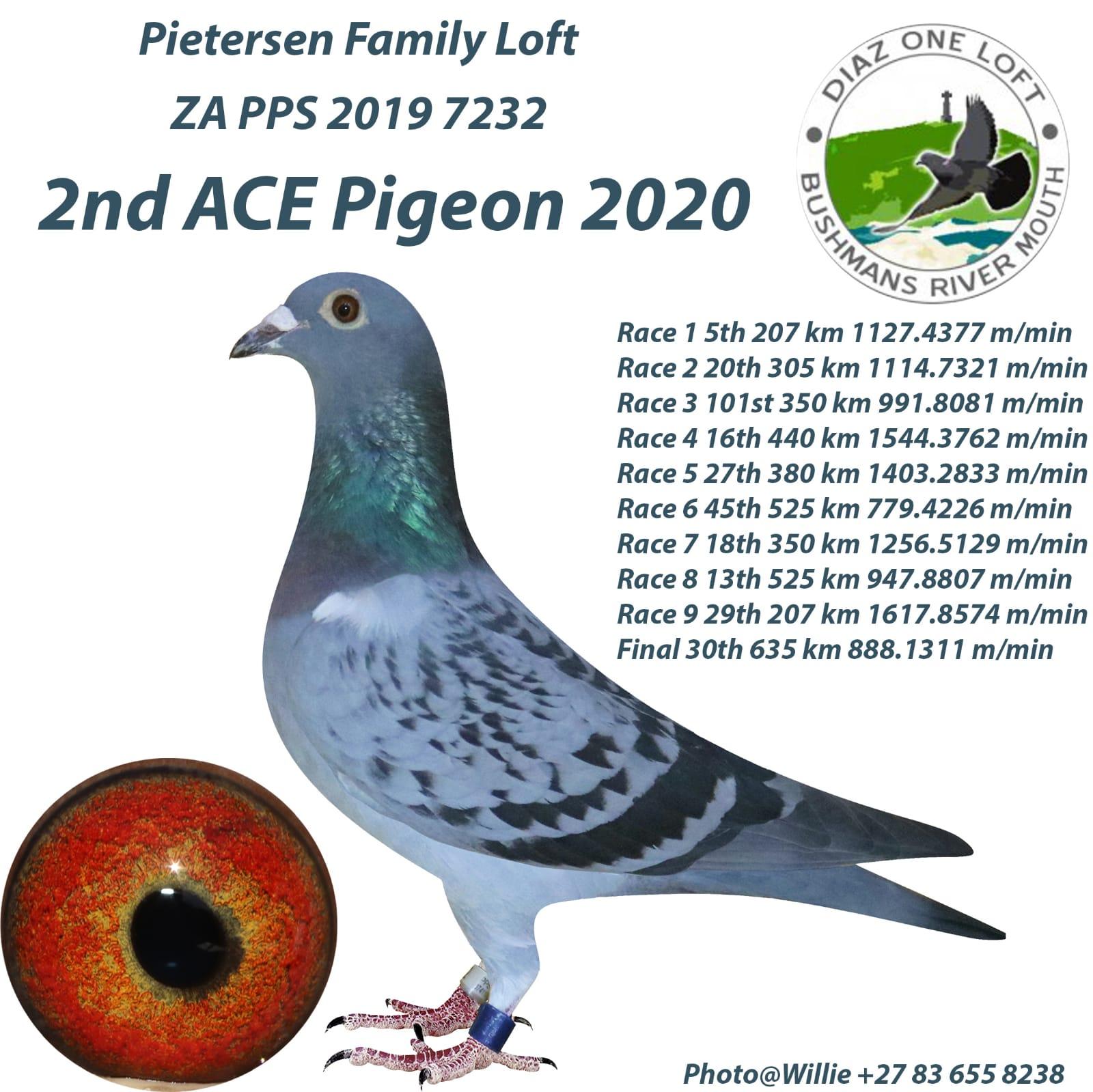 Pietersen Family Loft